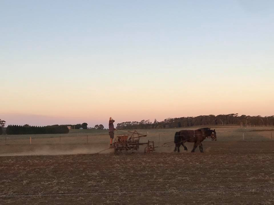 seed drill sunset